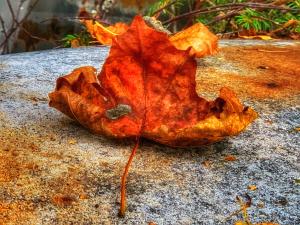 Rødt høst blad på bakken.