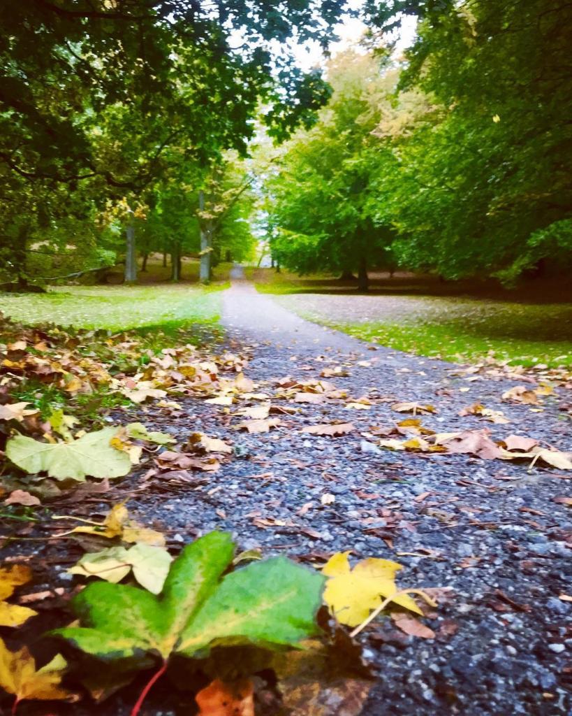 En sti gjennom en park med trær.